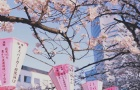 在日本留学,留考分数高更有机会得奖学金!