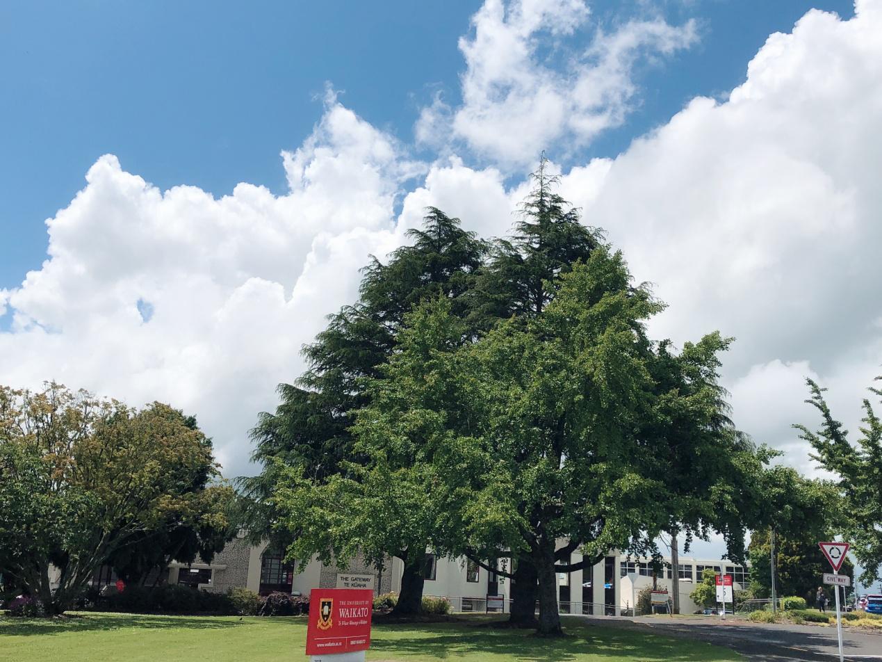 重磅!新西兰又一所公立大学在中国成立学习中心了!