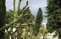 加州大学欧文分校怎么样?几个理由就能记住这所大学!