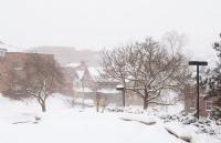 申请雪城大学本科生需要做哪些准备?