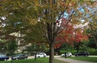相互信任积极沟通,W同学如愿拿下理想院校多伦多大学offer!