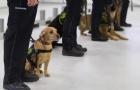 生物识别!南澳州机场部署新冠嗅探犬!