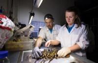 """让""""龙虾自由""""梦想成真的研究中心,落户塔斯马尼亚大学!"""