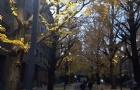 日本京都大学设立了新的奖学金制度!