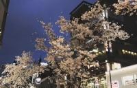 JLPT考试是什么?申请日本的大学需要多少分?