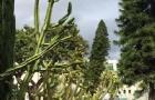 """2022「Niche全美最难申请大学」出炉!斯坦福大学成功夺回了""""全美最难申请大学""""称号"""