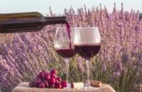 葡萄酒专业介绍 | 赴法学葡萄酒,公立、高商、专业院校如何选?