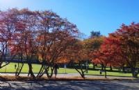 皇家山大学有哪些专业?