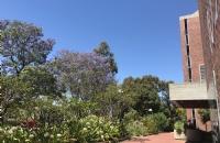 中央昆士兰大学毕业后平均年薪是多少?