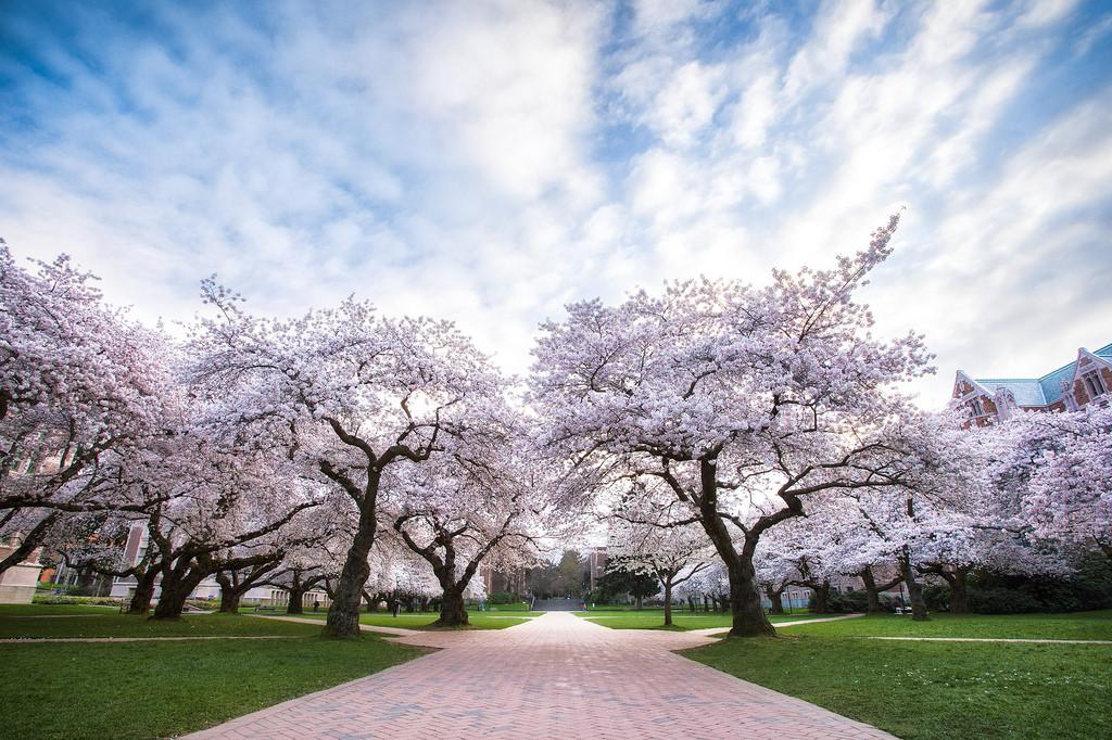 华盛顿大学tacoma分校强势专业
