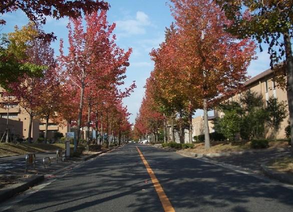 日本广岛大学的世界排名