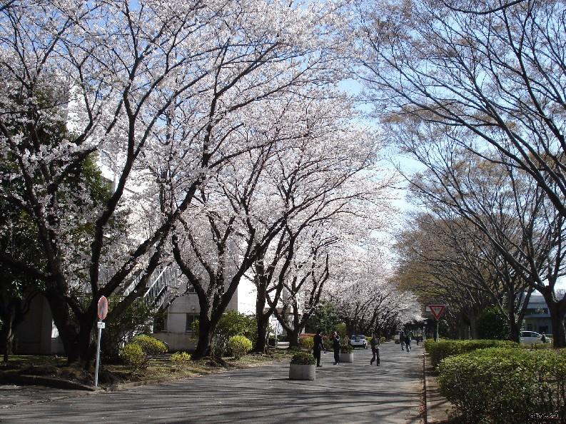 日本千叶大学的世界排名