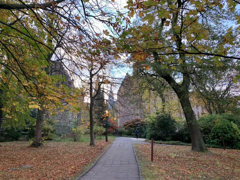 2019年伦敦大学教育学院本科如何申请?
