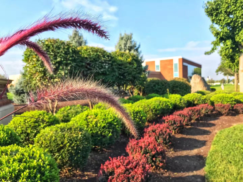 伊利诺伊州立大学最新申请流程