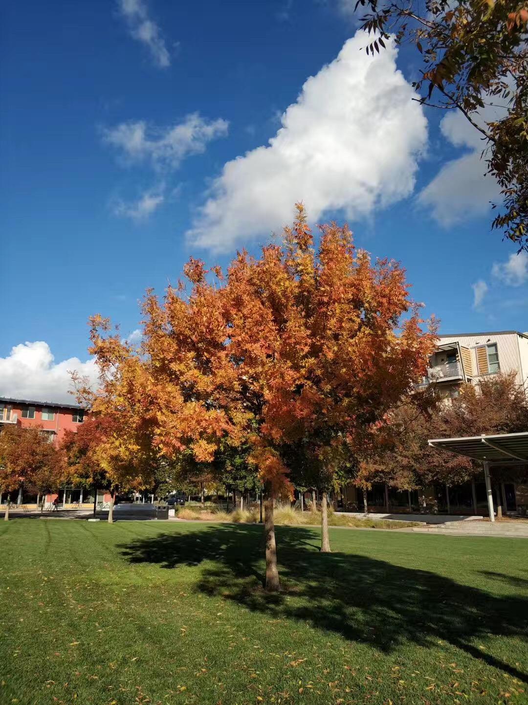 挖掘亮点优势,精美文书助力拿下哥伦比亚大学offer!