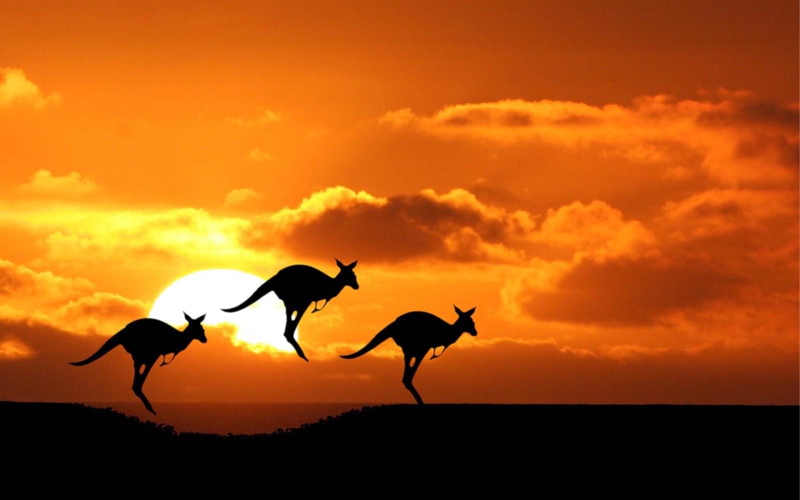 稳住!想要不被澳大利亚八大遣返,你得注意这些!