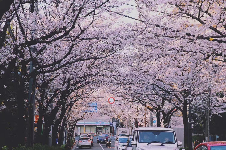 去日本留学读研,你需要的是这样的操作!